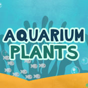Aquarium Plants Benefits