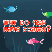 Why Do Fish Have Scales?