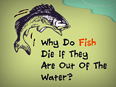 Why Do Fish Die If They Are Out Of The Water ?