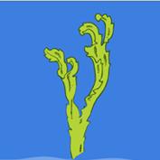 What is Seaweed?