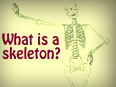 What is a Skeleton?