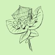Nonsense Botany - 02 by Edward Lear