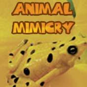 Animal Mimicry
