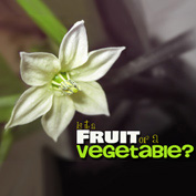 Is it a Fruit or a Vegetable?