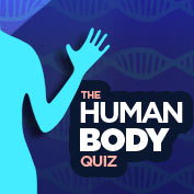 The Human Body Quiz