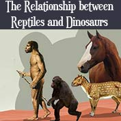 Relationship between Reptiles and Dinosaurs