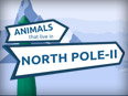 6 Animals in the North Pole