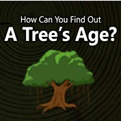 How to determine the Age of a Tree?