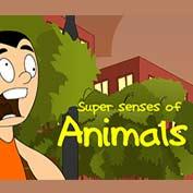 Super Senses of Animals