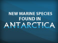 New Species in Antarctica