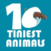 10 Tiniest Animals in the World