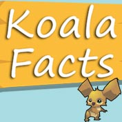 Koala Bear Fun Facts