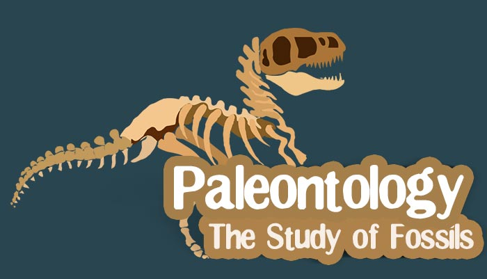 Paleontologist Facts For Kids