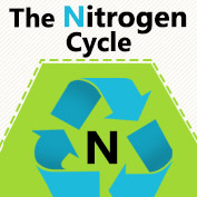 What is Nitrogen Cycle?