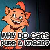 Why do Cats Purr and Knead - hp