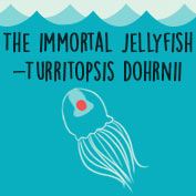 The Immortal Jellyfish - hp