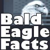 Bald Eagle Facts - hp