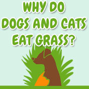 Why do dogs and cats eat grass? - hp
