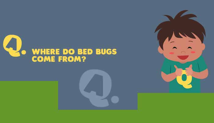 Permalink to Where Do Bed Bugs Come From