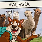 Alpaca Facts and Information - hp