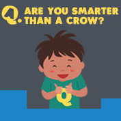 Are you smarter than a crow? - hp