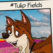 Tulip Fields in Holland - Hp