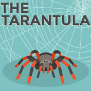 Tarantula Facts and Information - hp