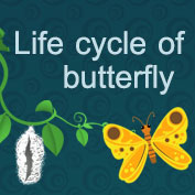 Life Cycle of a Butterfly - hp