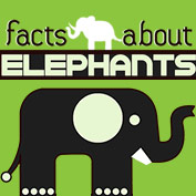 11 Facts about Elephants - hp