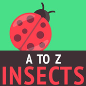 A to Z of Insects – Complete List