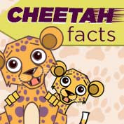 Cheetah Facts and Information - hp