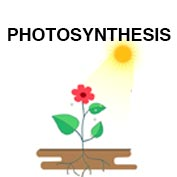 What Is Photosynthesis? - hp