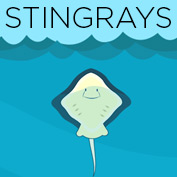 What Is A Stingray - hp