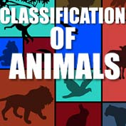 Classification of Animals - hp