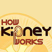 How do Kidneys Work? - hp