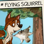 Flying Squirrel Facts - hp
