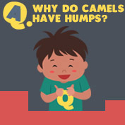 Why do Camels have humps? - hp