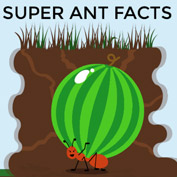 Facts about Ants hp