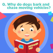 Why Dogs Bark at Cars? hp