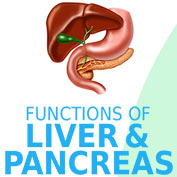Liver and Pancreas hp