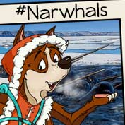 Narwhals hp