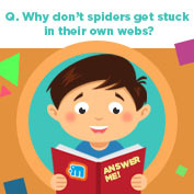 Why Don't Spiders Stick to Their Webs? hp