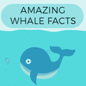 Whale Facts and Information