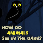 How do Animals See in the Dark? - hp