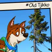 Old Tjikko Tree, Sweden
