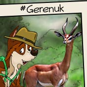 Gerenuk: Facts and Information - Square Thumbnails Image