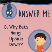 Why do Bats hang upside down? - Square Thumbnails Image