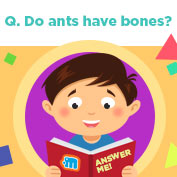 Do ants have bones? - Square Thumbnails Image