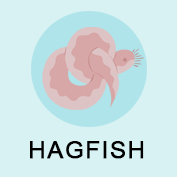 Hagfish Facts - Square Thumbnails Image