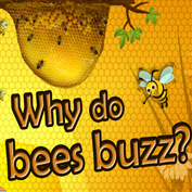 Why do Bees Buzz? - Square Thumbnails Image